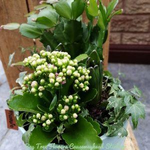 Bowl of Plants